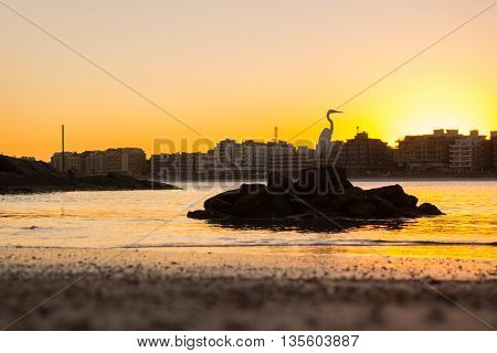 Egret watching the sunset from a rock