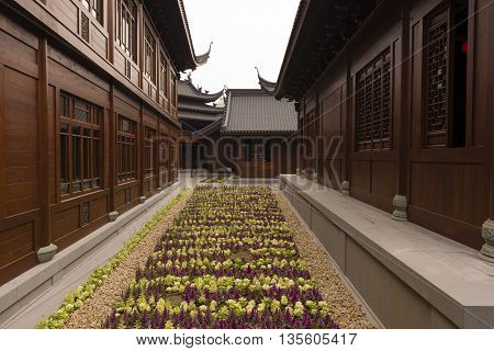 A flower bed in a passageway in a Buddhist Temple compound in Shanghai