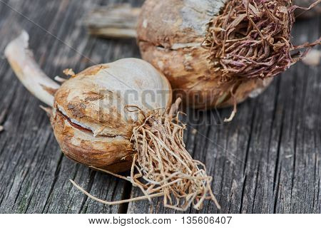 Eco garlic on old wooden table. Food ingredients