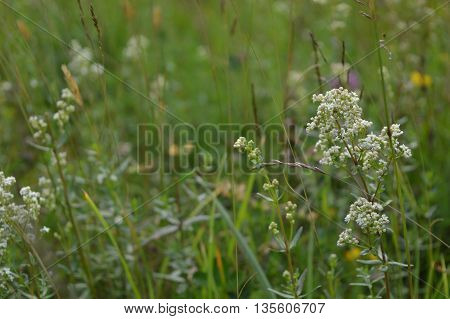 An variety of wild flowers in a meadow.
