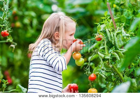 Cute little girl collects crop cucumbers and tomatos in the greenhouse