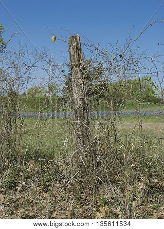 An old fence post out in the country with barbed wire.