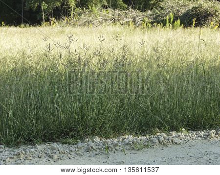 The side of a country road with tall grass.