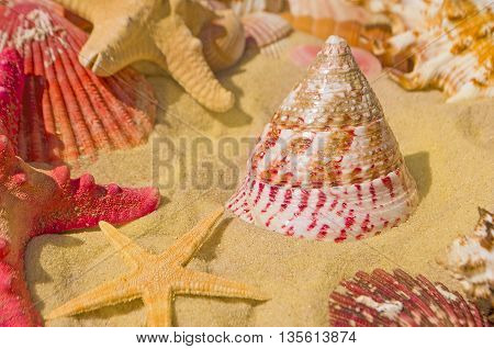 Summer concept of sandy beach, shells and starfish.  Red starfish and seashells on the sand
