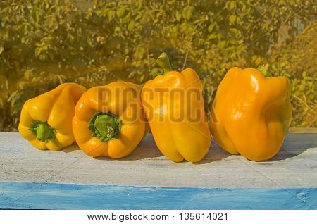 Yellow pepper. Yellow paprika on the wooden table