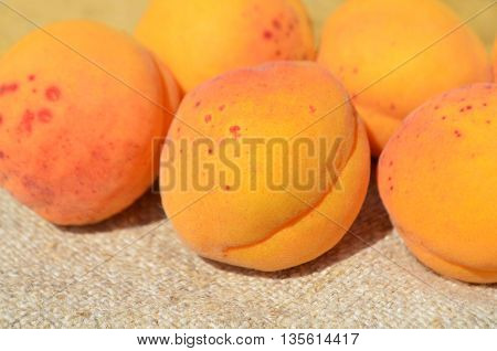 Ripe apricots. Fresh sweet apricots on table