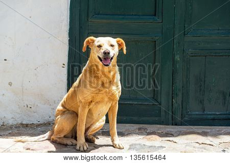 Dog In Colonial Town