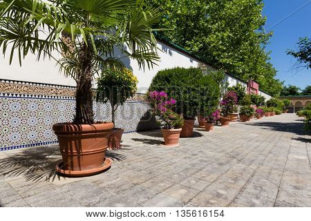 Oriental Garden - Court Of Morrocan House