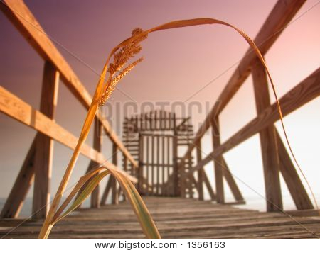 Reed On A Mississippi Pier