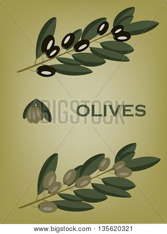 Green and black olive branches. Olive composition.