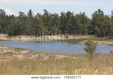 Wetlands with conifer trees and sand dunes seen at Ludington State Park in Michigan