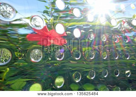 Abstract reflections of a garden photographed with a holed metal object (a grater) to create lens flare and distortion.