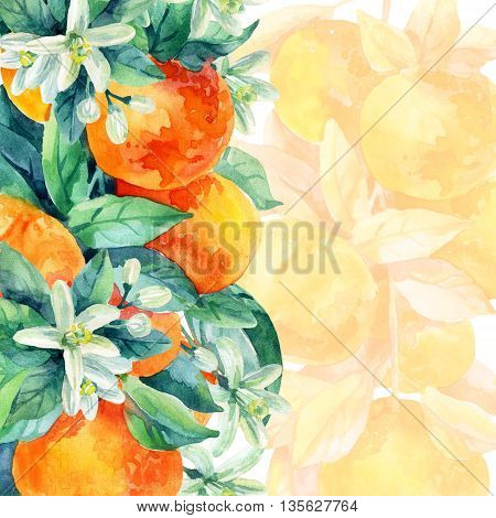 Watercolor mandarine orange fruit card with leaves and blossom on white background. Orange citrus tree. Mandarin bloom. Tangerine with leaves branch flower. Hand painted illustration