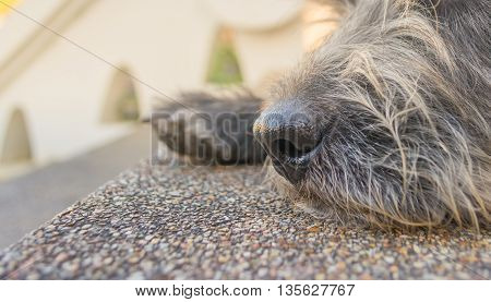 image of gray cute stray dog on day time .