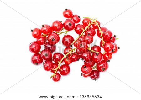 Red currant on a white background.   We see  red currant  in a garden near Kiev.
