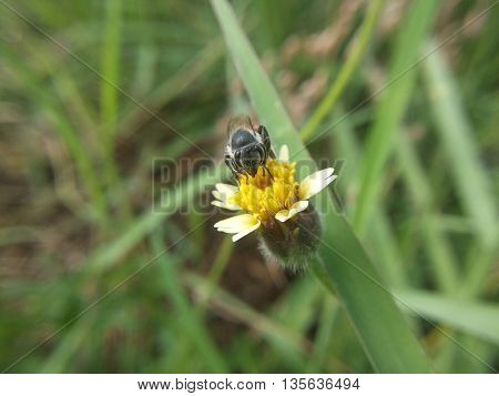 close up Bees are swarming grass flowers