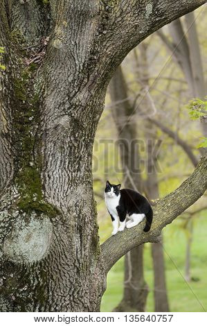 Black and white cat sitting on a tree branch