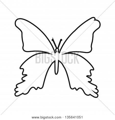 butterfly silhouette isolated icon design, vector illustration  graphic