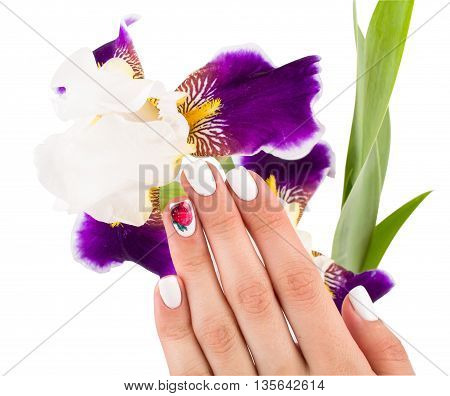Iris and hands of the person on a white background