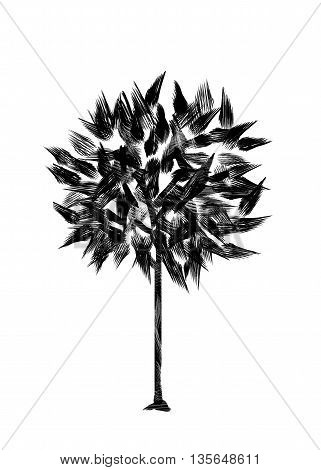 Drawing foliar tree on a white background. Isolated black silhouette on a white background. Graphic arts.