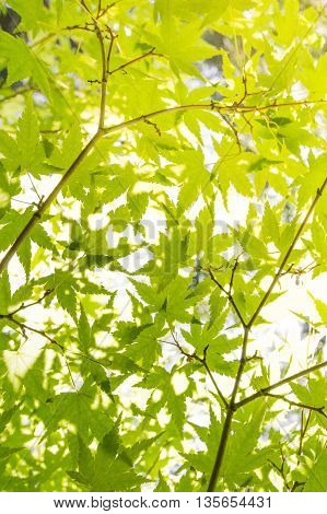 green leaves in sunlight - tree background - illustrated