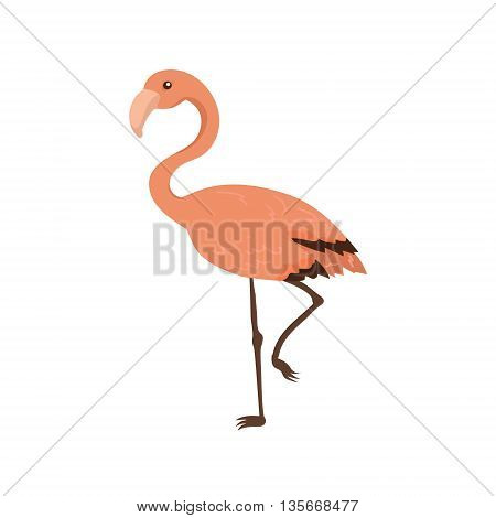 Pink Flamingo Realistic Childish Illustration In Simple Cute Vector Design Isolated On White Background