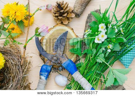 gardening set of pruner stump shell pinecone nest leaves and flowers on wooden background