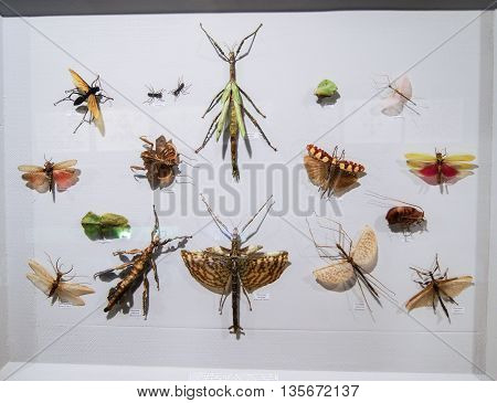 Pyatigorsk, Russia - 3 March, Different flying insects, 3 March, 2016. Resort zone Mineral Waters, Krasnodar region. Insect Museum.