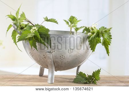 Freshly cut nettles in colander ready for cooking.