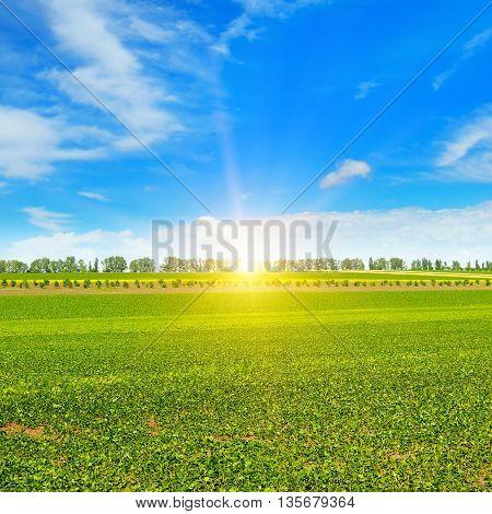cloudy field, sun rise and blue sky