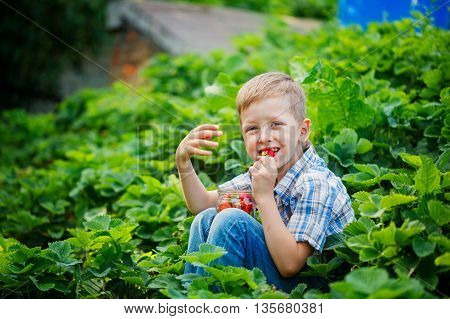 Cute Little Boy In Summer Garden With Buckets Of Ripe Fresh Strawberries.