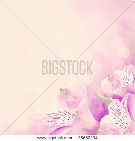 violet Floral blossom background with pink flowers