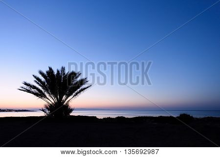 Photo of beach and sea in protaras cyprus island with big palm trees silhouette at sunset.