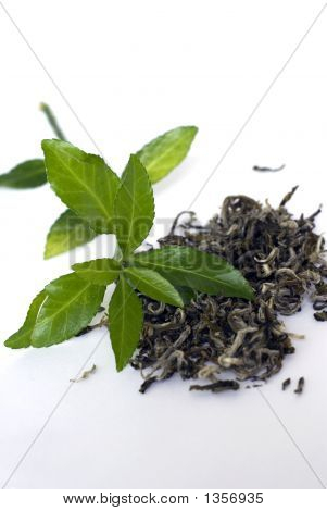 Green Tea Last