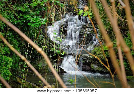 mountain stream waterfall with stones and forest greenery
