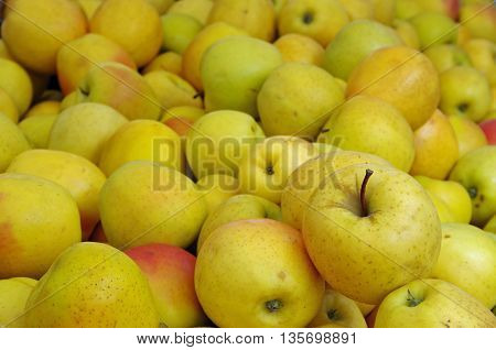 Yellow apples  in piles at market place background