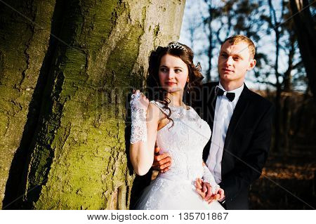 Great And Gorgeous Wedding Couple At Sunset Near Wood