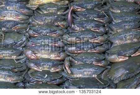 Asia Vietnam Market Seafood Crab
