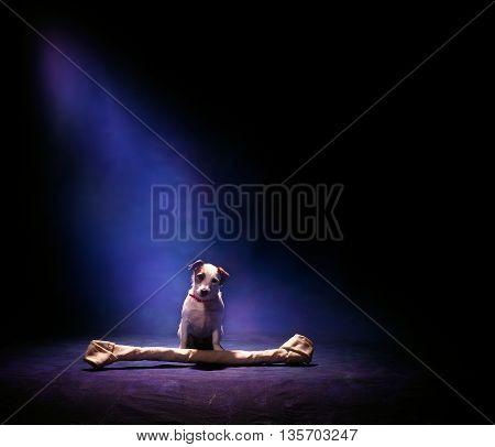 dog with large bone on dark blue background
