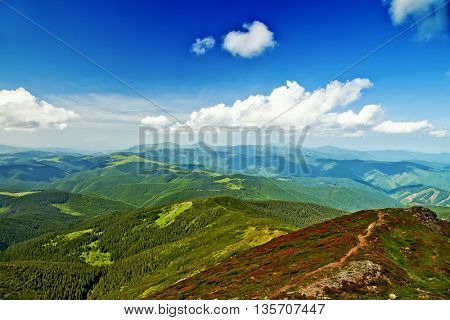 Natural summer scene in Carpathian mountains. Fresh grass  glowing last sunlight in evening. Ukraine, Europe.