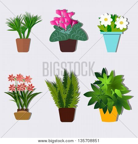Set houseplants for homes and offices vector illustration