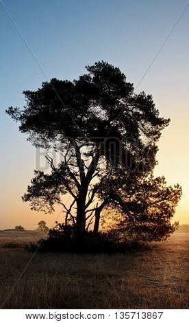 Tree Silhouette during sunrise in The Netherlands