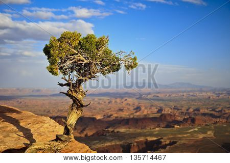 A lone tree watching a beautiful view in Utah, USA.
