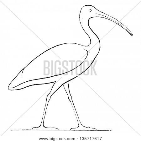 Ibis coronation, Egyptian sculpture, vintage engraved illustration. Magasin Pittoresque 1852.