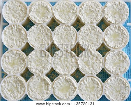 Molds With Semifinished For Production Of Soft Cheese