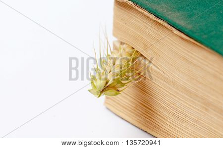 Picture of an wheat ears between the pages of an old book