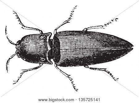 Insect. From Magasin Pittoresque, vintage engraving, 1867.