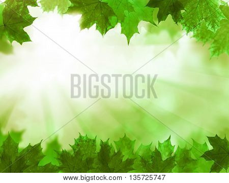 Green Leaves. Summer Blossom Background with sunlight