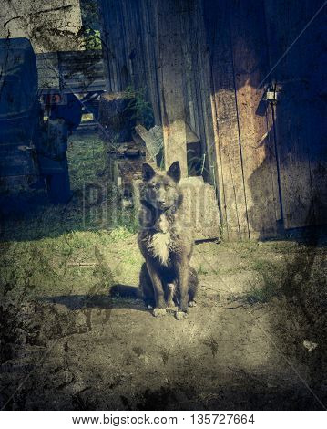 A dog on a chain at the door. Photo in a grunge style.