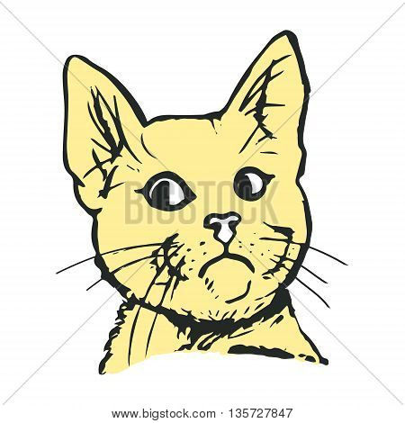 Graphic image of a head of a cat in color. Funny cat looking to the side an abstract pattern on a white background. Vector illustration